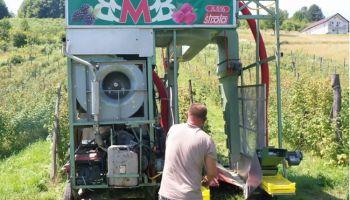 BMB - berač malina Busovača
