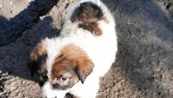 Pokrenut projekat za utopljavanje mali kučića u prihvatilištu Koprivnica
