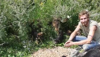 Neko ostavio i istresao vreću granula na ulazu ispred azila s namjerom da što više pasa privuče tu na magistralni put Bugojno – Kupres