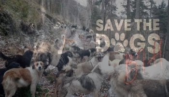 """Vrijedna donacija udruženja Save the Dogs BiH za Prihvatilište  """"Koprivnica"""""""