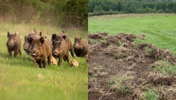 Lov u SBK zabranjen, a divljač uništava posjede
