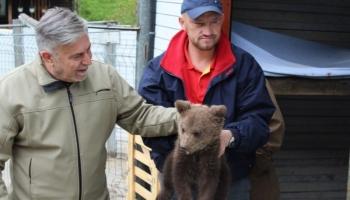 HODŽIĆ: Medvjed mora biti prepoznat kao nacionalno prirodno blago u BiH