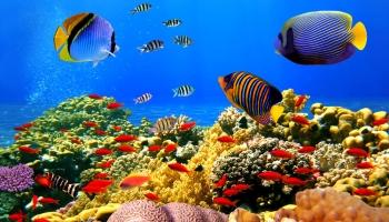 Najbolja hrana za akvarijske ribice