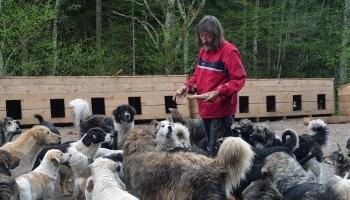 Prihvatilište za pse Koprivnica nastavlja svoje aktivnosti