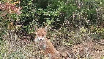 VIDEO: Odobriti lov u Gornjem Vakufu – Uskoplju